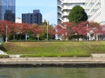 The view from the Sumida river