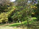 Trees in Hamarikyu park