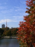 Red autumn leaves and the Tokyo Tower