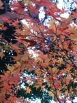 Autumn reds and oranges