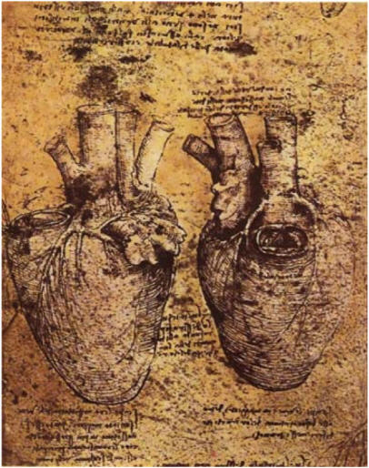 leonardo-da-vinci-anatomy_6