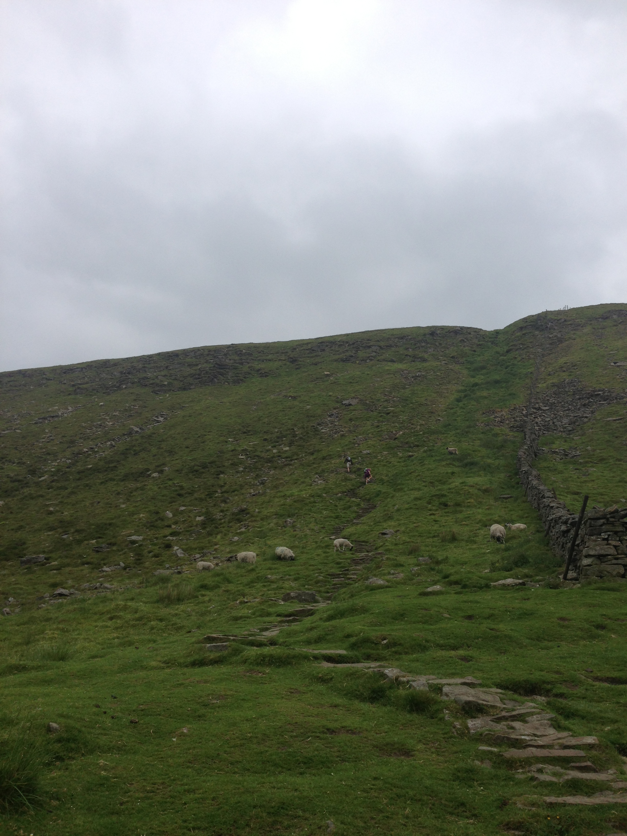 Almost at the top of Ingleborough