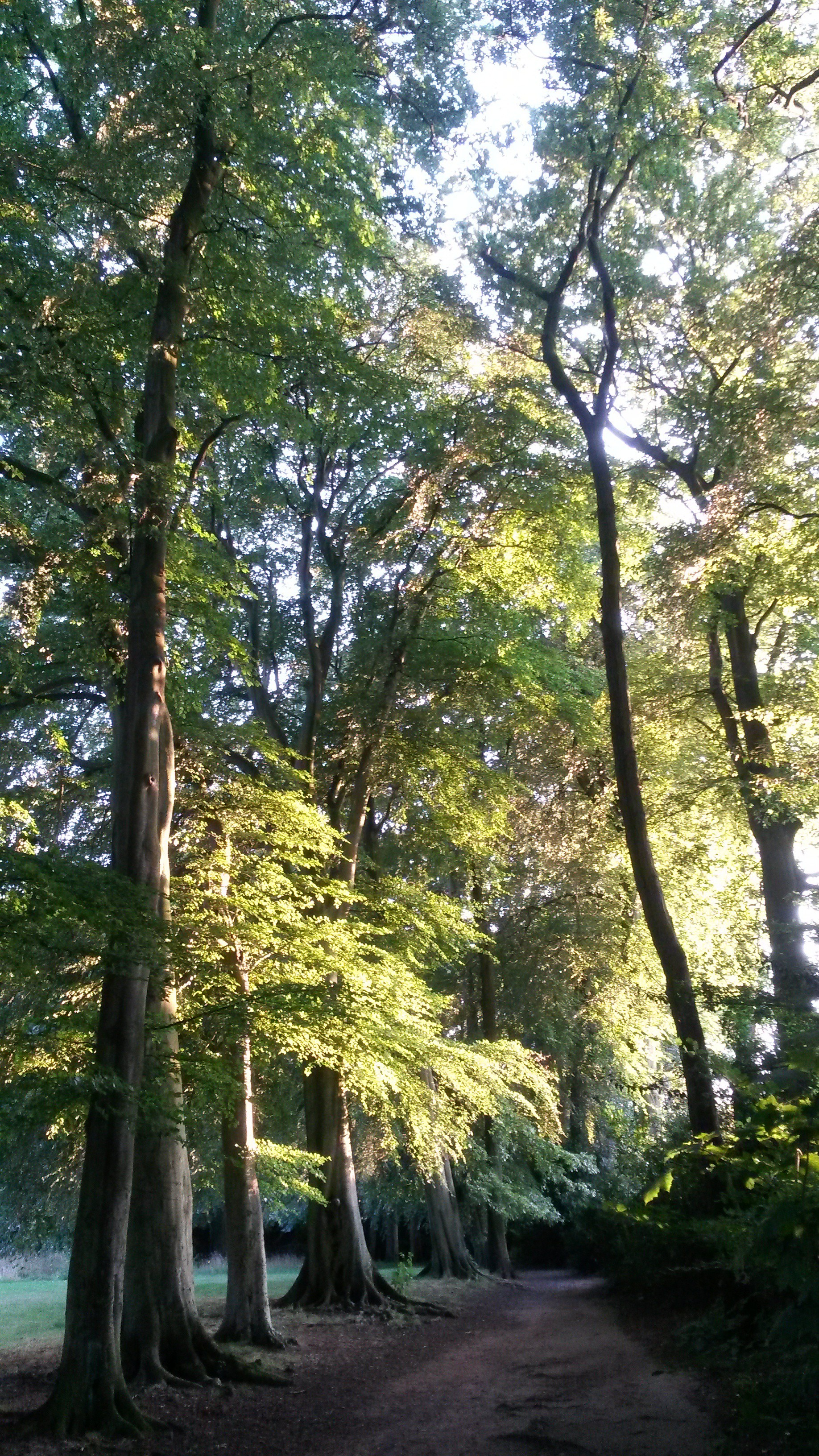Sunlight in The Beeches, Reynolds Park